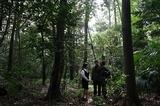 明治神宮・鎮守の森に訪れて