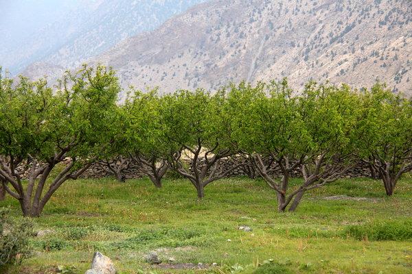 リンゴ農園.jpg