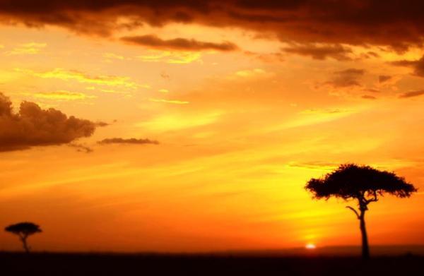 アフリカの命1.jpg