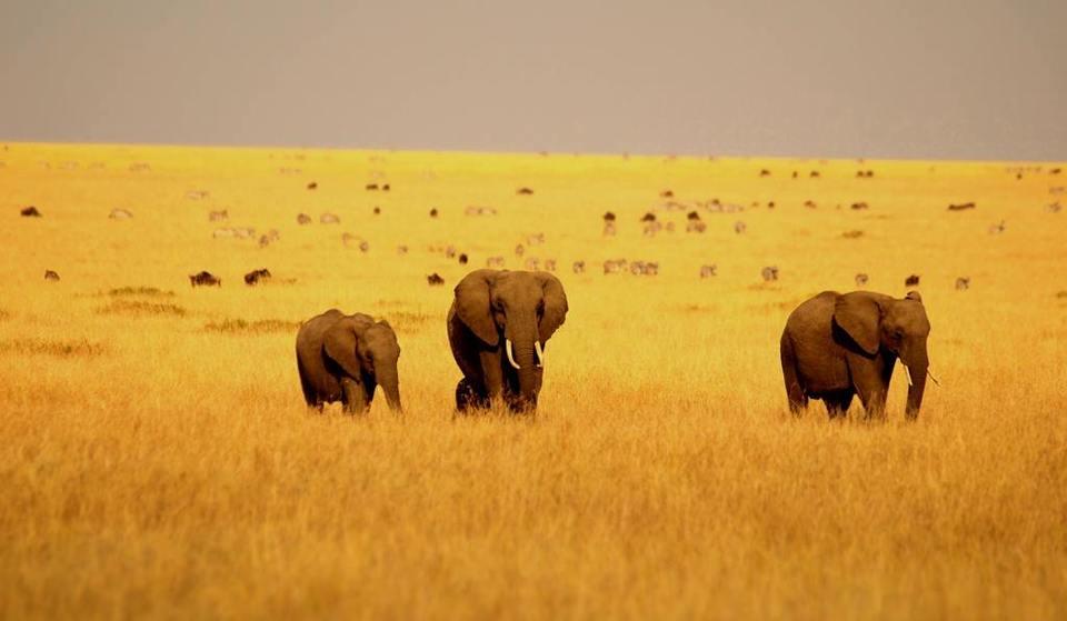 アフリカ遠征4