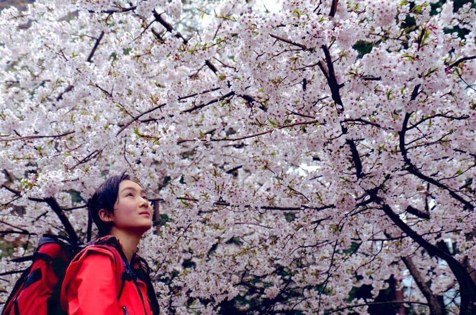 ヒマラヤで桜