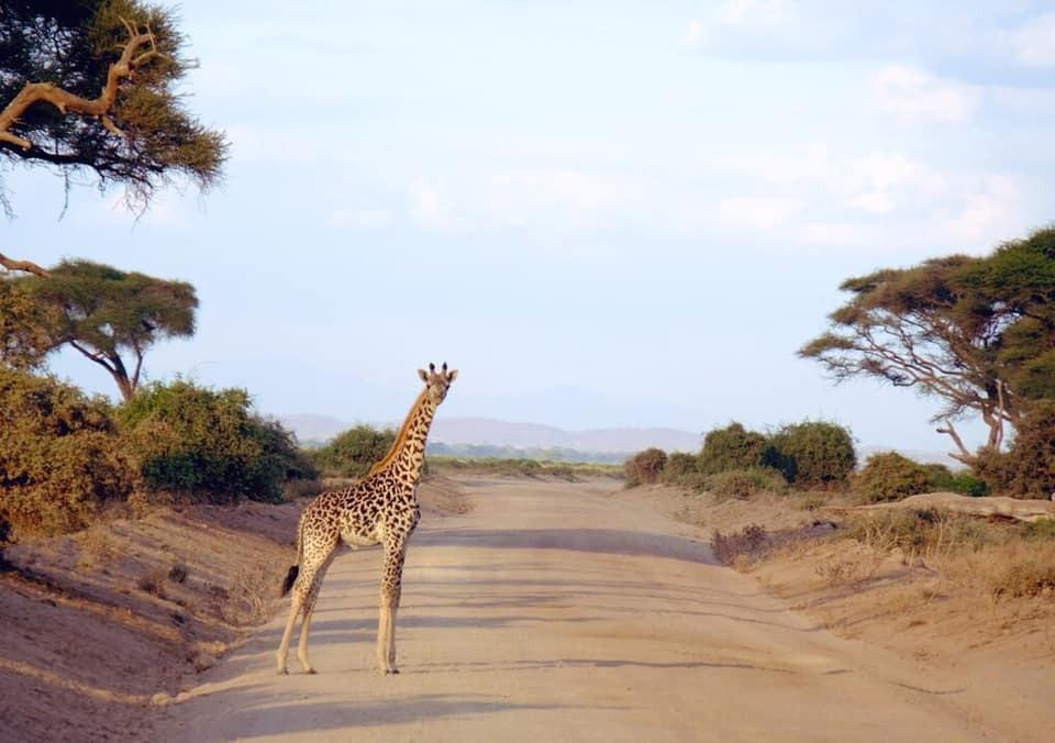 6年ぶりのアフリカの大地