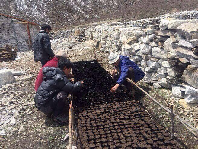 サマ村森林再生プロジェクト