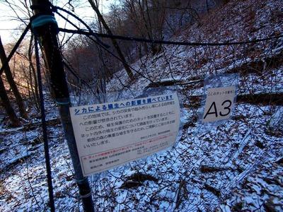 6都は鹿が及ぼす森林破壊を調査している - コピー