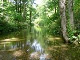 緑に映る川