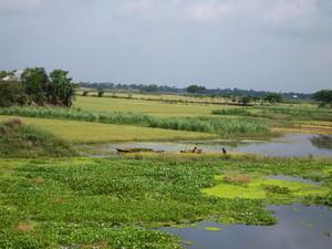 田畑に川の水が流れ込んでいる
