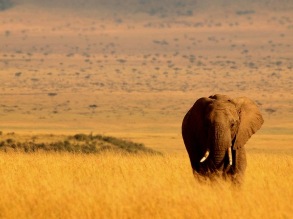 1番・野生の王国(マサイマラ・ケニア)