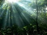 神々しいブナの原生林