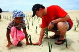 島の子供とマングローブを植える