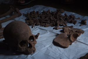 前回、レイテでのご遺骨調査で発見されたご遺骨