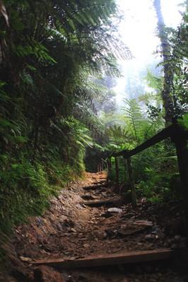 ジャングルの中の登山道