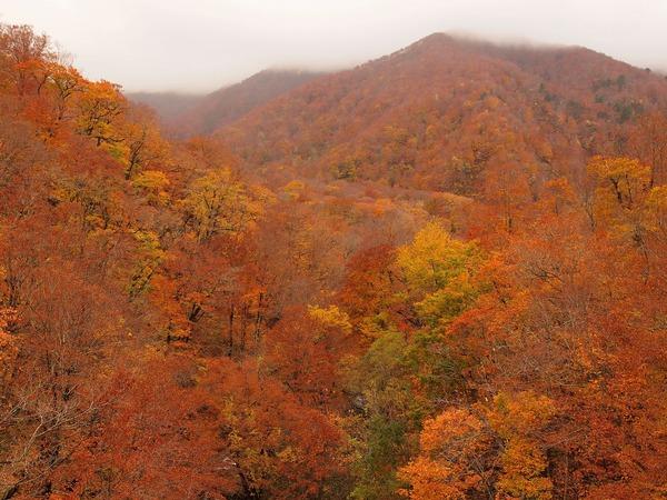 1枚目・紅葉の白神山地」