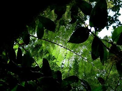 これは野口健撮影ジャングル