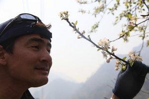 日本で見逃した桜に出会う