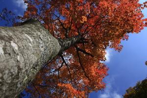 紅葉がなんとも美しい・野口健撮影