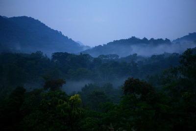 ブウィンディ国立公園のジャングル