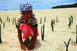 マングローブを植える子供