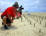 マングローブを植える鴇田環境室長