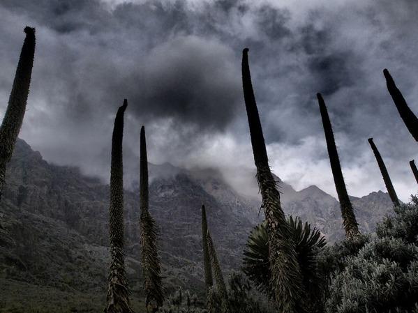 6番・雨の山・ルゥエンゾリ山地(ウガンダ)
