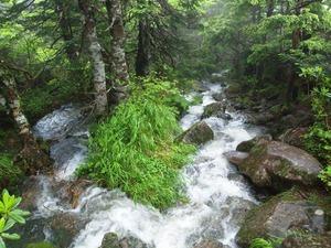登山道が川になった