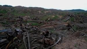 ジャングルを伐採し