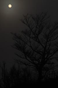月光ではなく霧の中の太陽です(平賀撮影)
