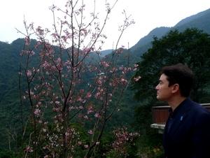 高砂義勇隊英霊記念碑の近くに植えられた桜
