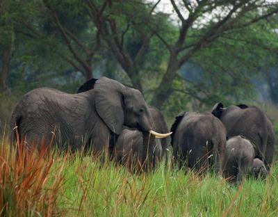 ゾウの家族