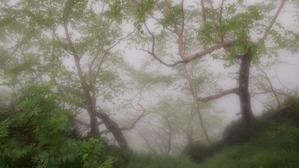 雨の森も神秘的