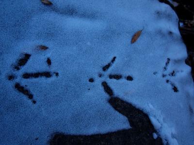 5鳥の足跡を細かく確認するレンジャー - コピー